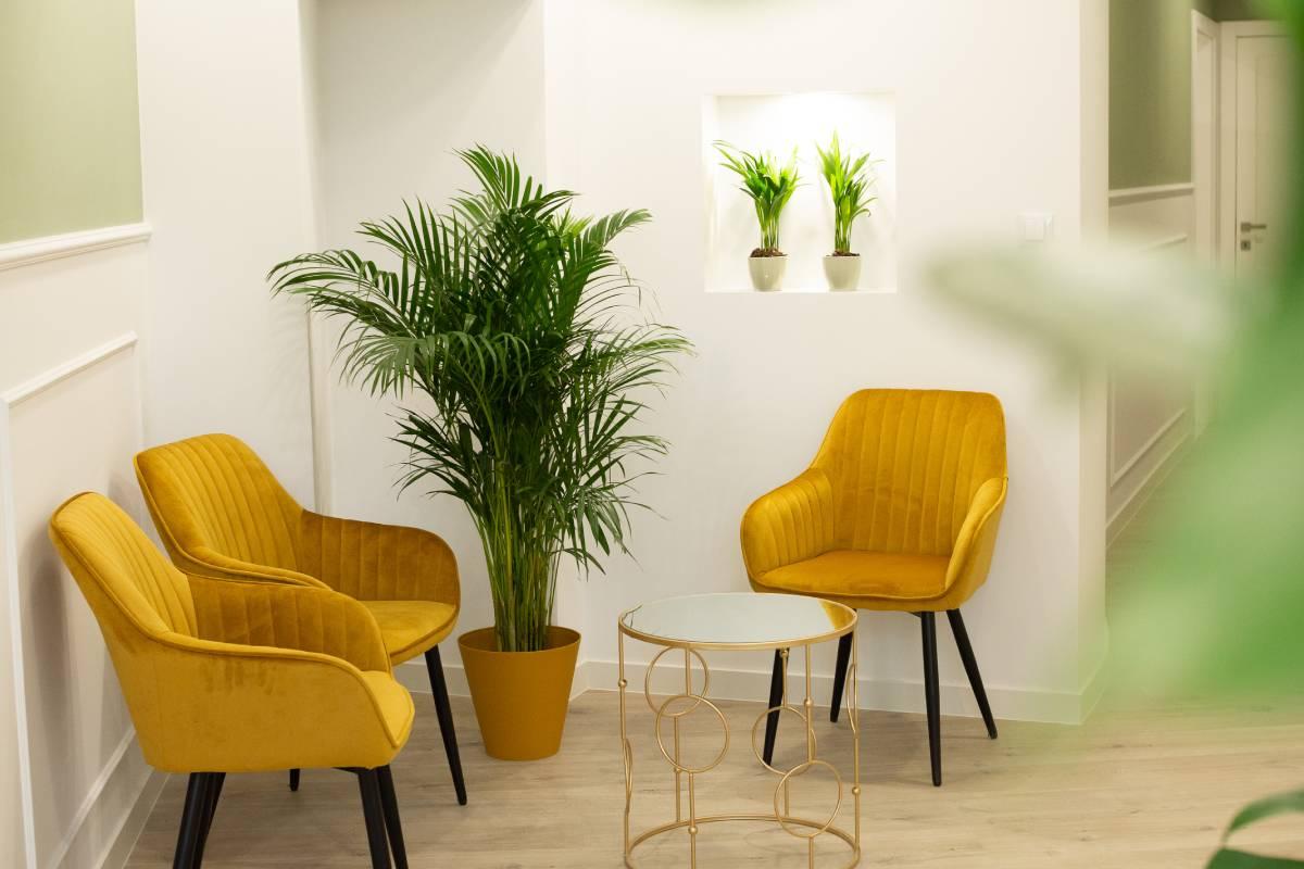 Poczeklania przy gabinecie depilacji laserowej wklinice Envie. Musztardowe fotele na tle białej ściany, palma wrogu.